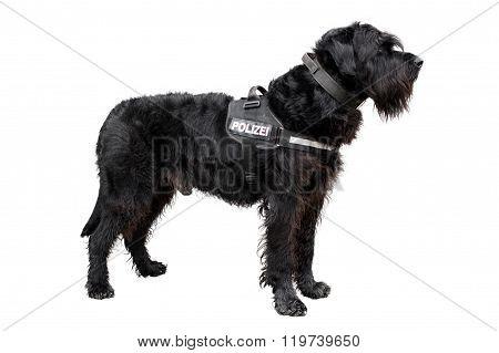 Policedog K9
