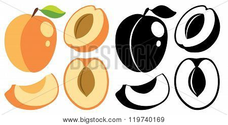 Vector Color And Monochrome Apricots