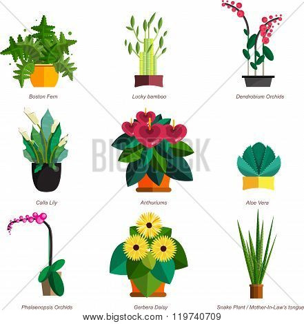Illustration of houseplants, indoor and office plants in pot. Dracaena, fern, bamboo, spathyfyllium,