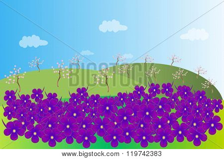 The spring landscape. Green hills, purple violets with a yellow center, blooming garden, trees with
