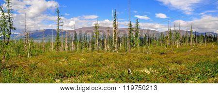 Panorama Mountain Tundra On The Putorana Plateau.