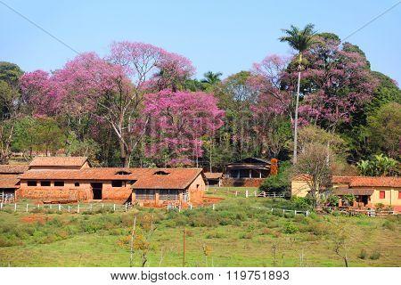 Rural landscape in Brazil in spring time