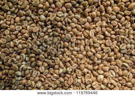 Robusta coffee beans from Bali