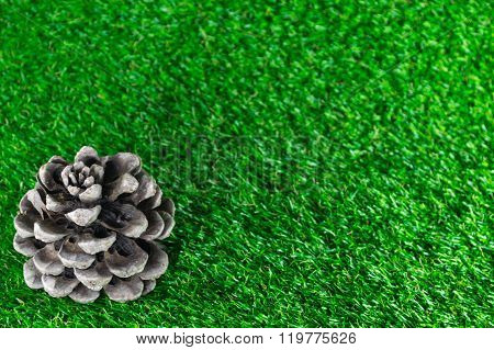Pinecone On The Grass