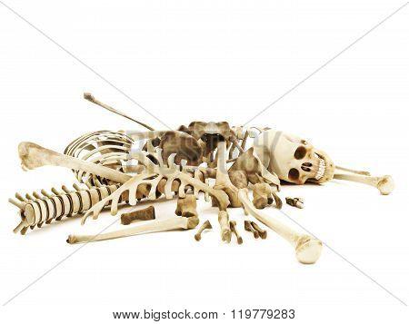 Pile of bones