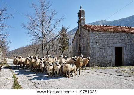 Sheep flock and church