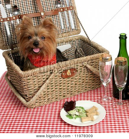 Two adorable yorkies on a picnic with wine and dog bisquits