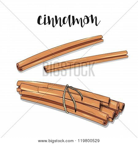 Cinnamon isolated object sketch. Spice for food. Culinary seasoning
