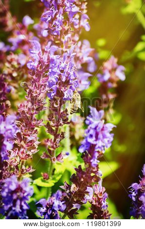 Bee At Purple Flower