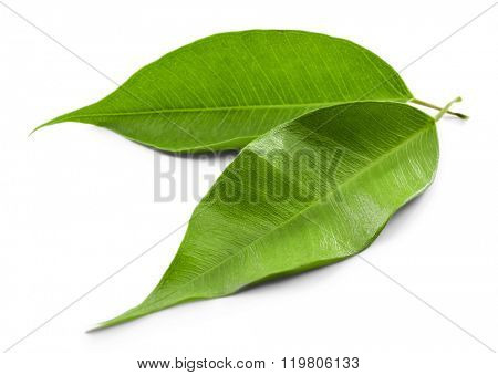 Green tea leaves, isolated on white