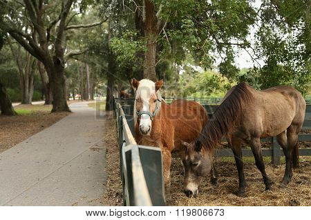 Horses Along the Path