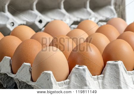 fresh eggs on paper tray