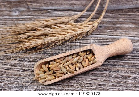 Heap And Ears Of Rye Grain On Wooden Background