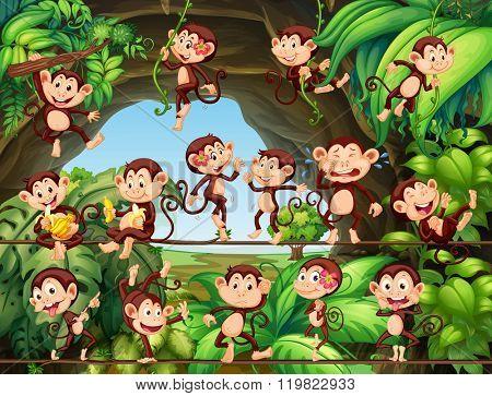 Monkeys living in the forest illustration