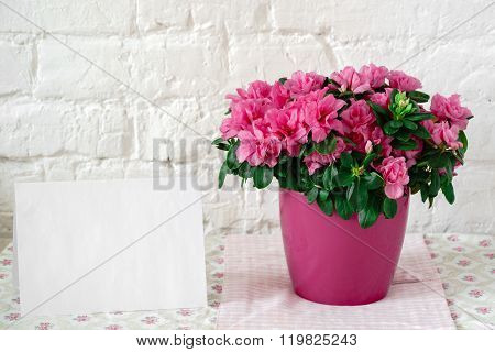 blooming azalea in pink flowerpot blank card free place for text
