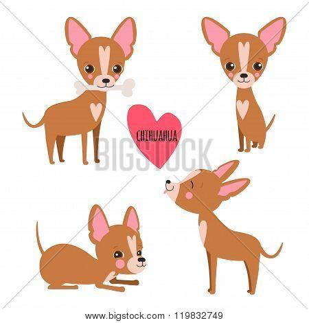 Cute Chihuahua Set
