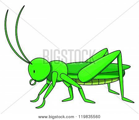 Locust cartoon illustration isolated white