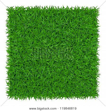 Green Grass Background 1