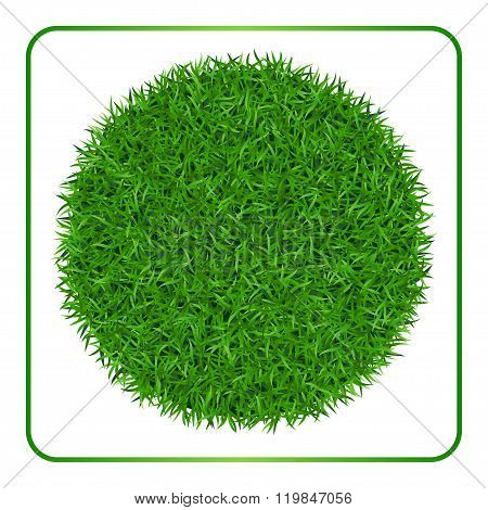 Green Grass Background  Circle 1