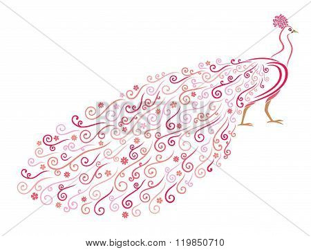 Vector illustration of stylized abstract peacock on white background