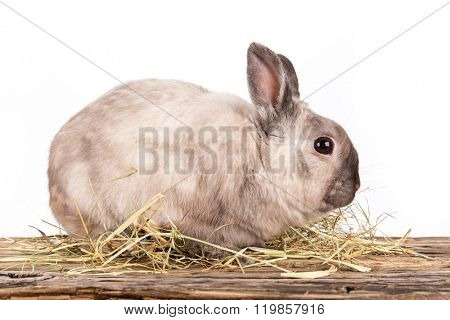 Funny little rabbit isolated on white background.