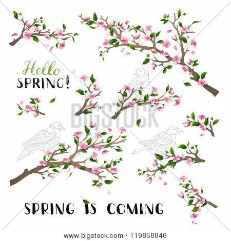 Vector Set Of Spring Blanches Isolated On White Background.