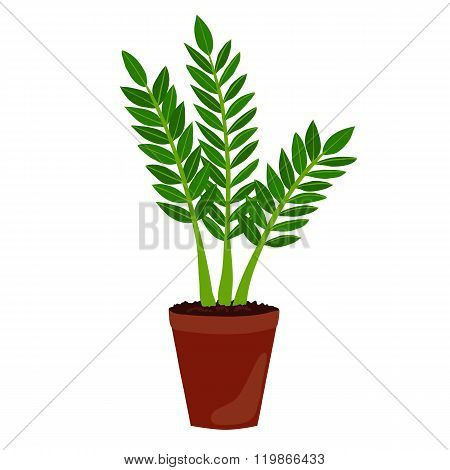 Houseplant: zamioculcas. ZZ plant.