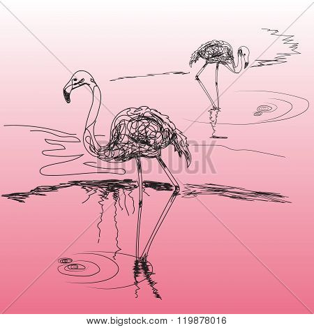 Two Species Of Flamingos Standing In Water