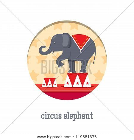 Circus elephant acrobat