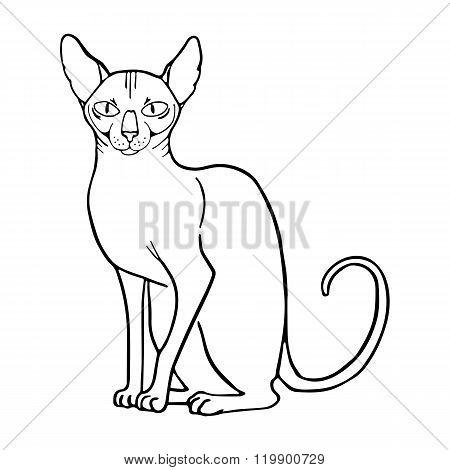 Vector illustration of sphinx cat