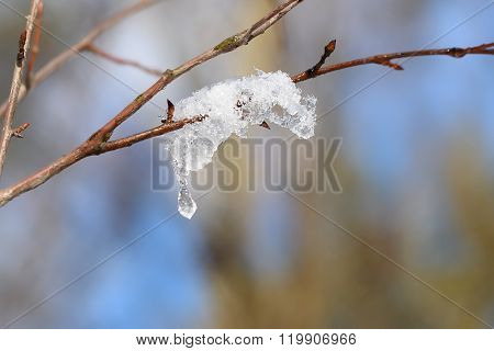 The Thawing Snow On A Branch