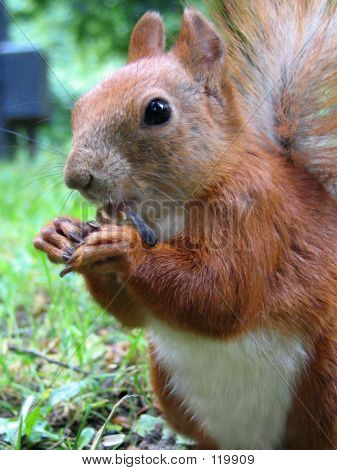 Fiber For Squirrel