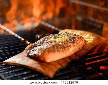 seasoned salmon fillet cooking on cedar plank over grill