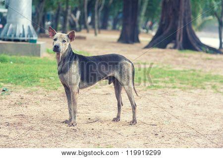 Old Sad Abandoned Dog