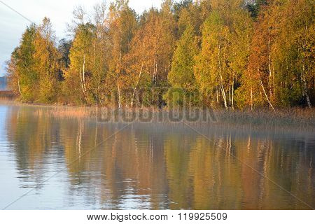 Autumn Forest On The Lake At Sunrise.
