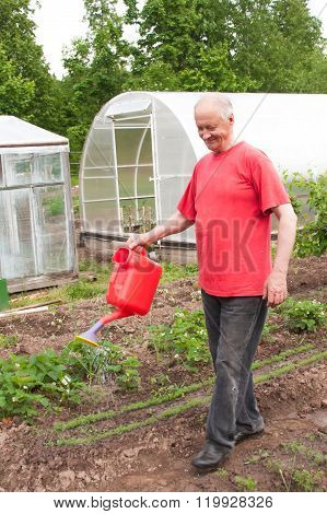 An Elderly Man Works In A Garden