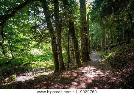 Green forest of Biogradsa gora national park