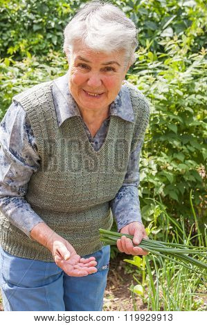 An Elderly Woman Collects Spring Onions