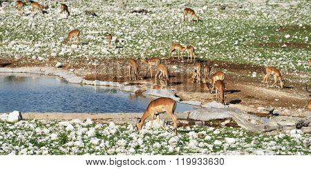 Wild Nature, Africa