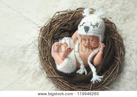 Newborn Baby Boy Wearing A White Owl Hat