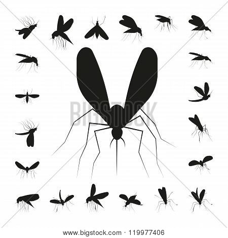 Set mosquito silhouette