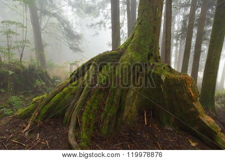 Tree Trunk And Root