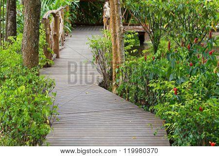 Wooden Walkway In Green Nature Garden