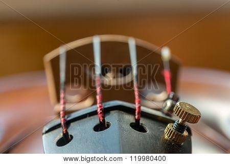 Close Up Of Violin Strings