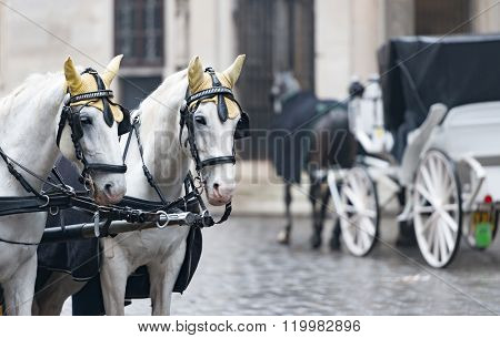 Horses And Carriage On Stefansplatz In Vienna.