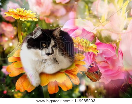 Fantasy Cat On Flower With Butterfly