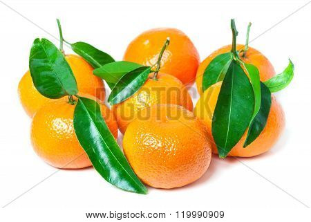 Leaf Clementines