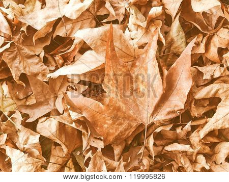 Retro Looking Falling Leaves