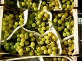 Bunches Of Organic Green Grapes In Containers At Market
