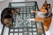 stock photo of cat dog  - cute cat and cute dog playing chess - JPG